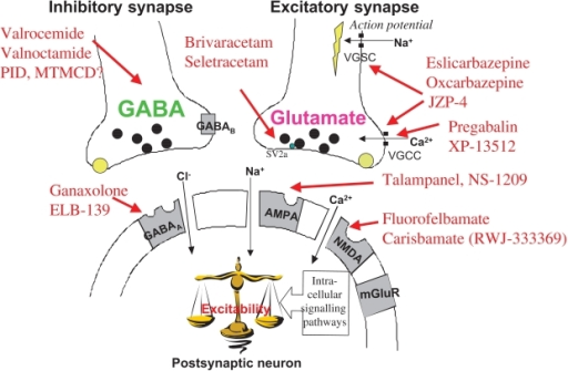 Gabapentin mechanism of action